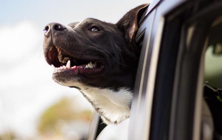 Comment voyager avec un animal ?