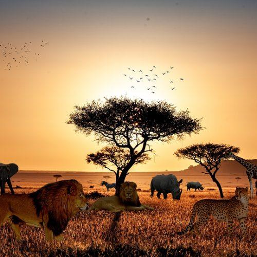 Où partir en safari ?